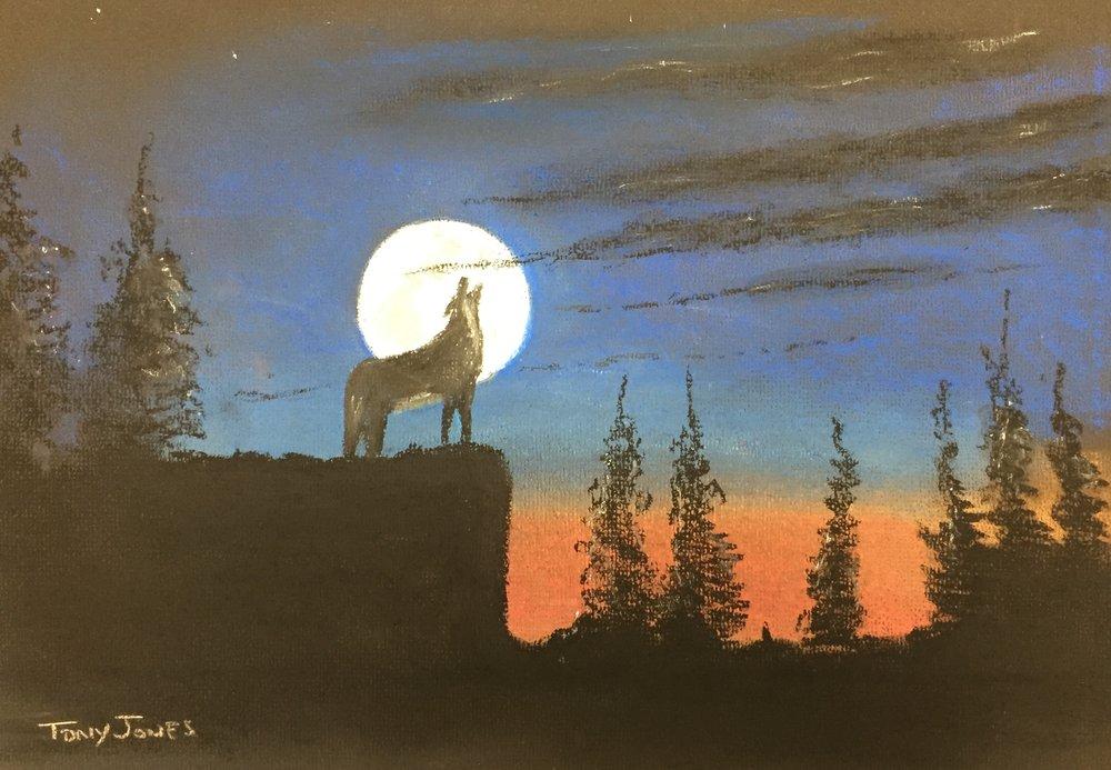 TJ wolf.jpg