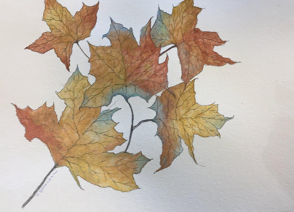 SS leaves.jpg