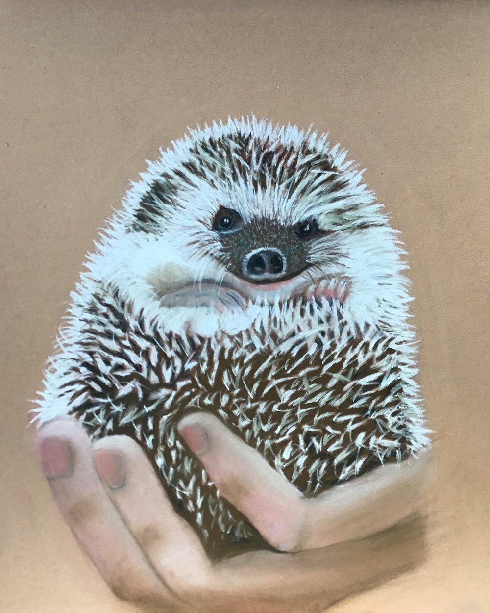 LT hedgehog.JPG