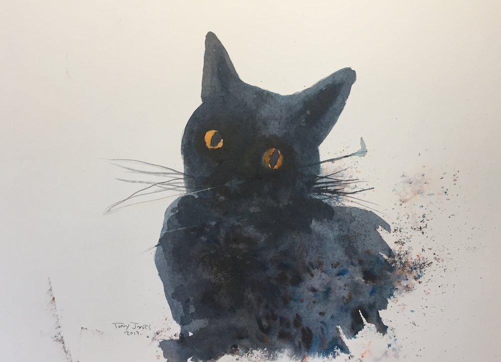 tj cat.jpg