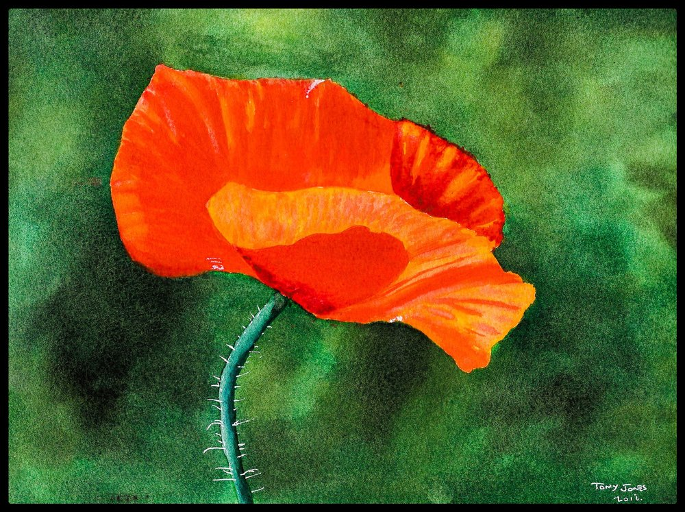 poppy with frame.JPEG