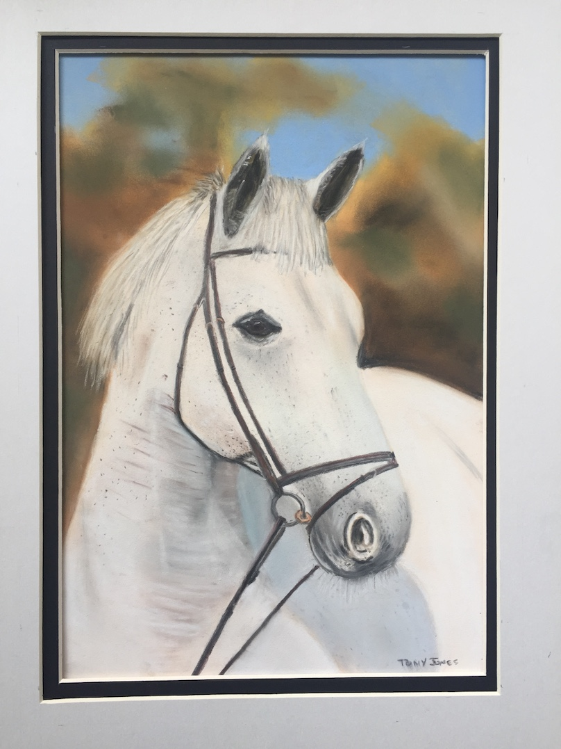 Tony J horse.JPG