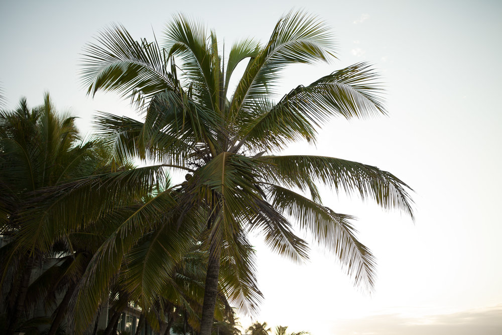 PuertoRico_ToriRayPhotography-45.jpg