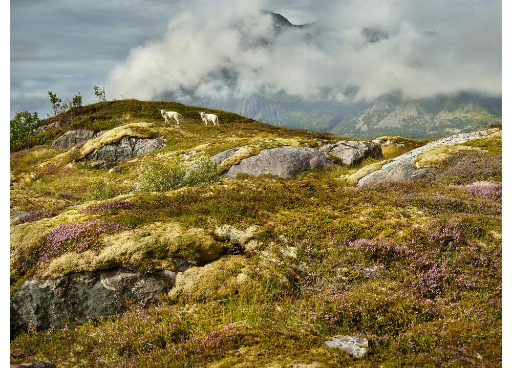 Loften Snacktime, Lofoten Islands, Norway