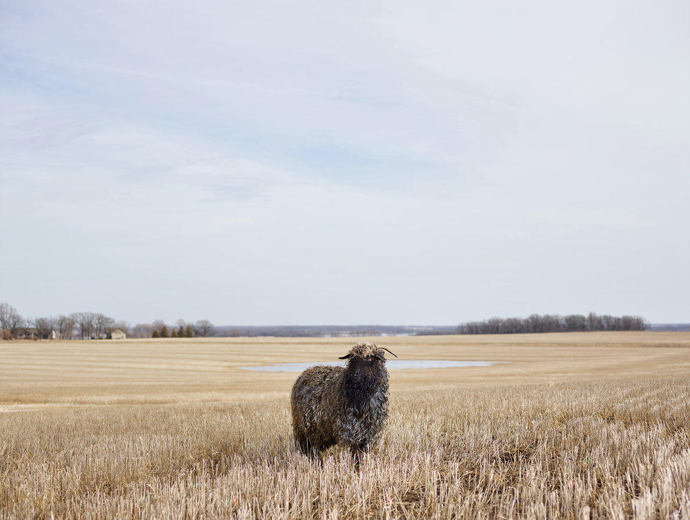 Curly, Otter Trail County, Minnesota, 2015.