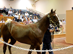 Betchacantcatchme – the highest seller during day 2 of the Ruidoso Select Yearling Sale, is shown in the pavlion during Saturday Night's auction. Dan and Jolene Urschel paid $235,000 for the Tempting Dash colt. (Photo by Todd Fuqua)