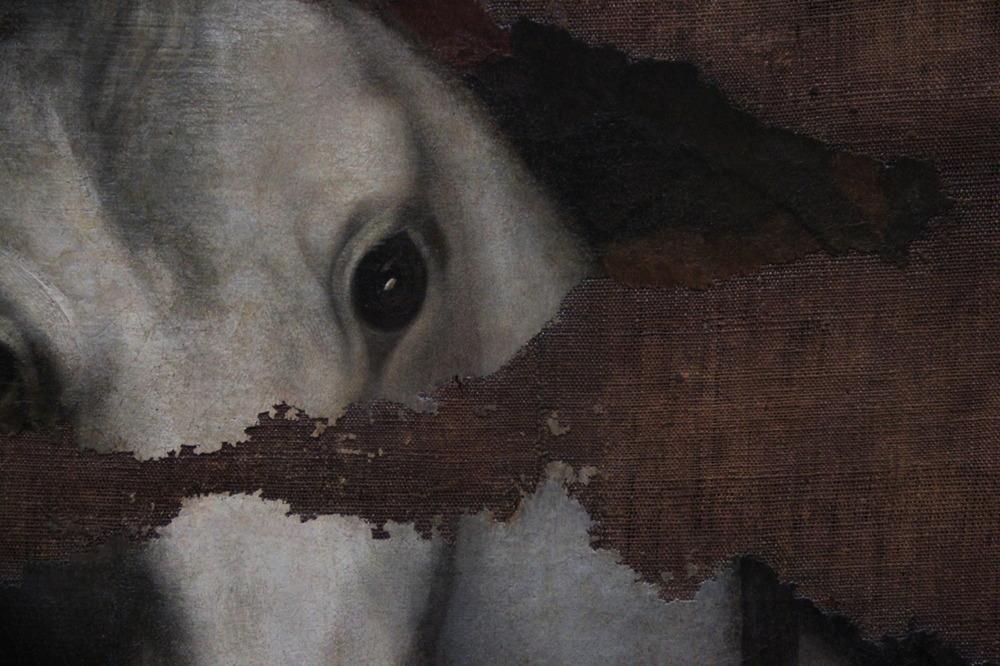 horse gaze.jpg