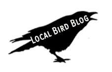 birdblog.png