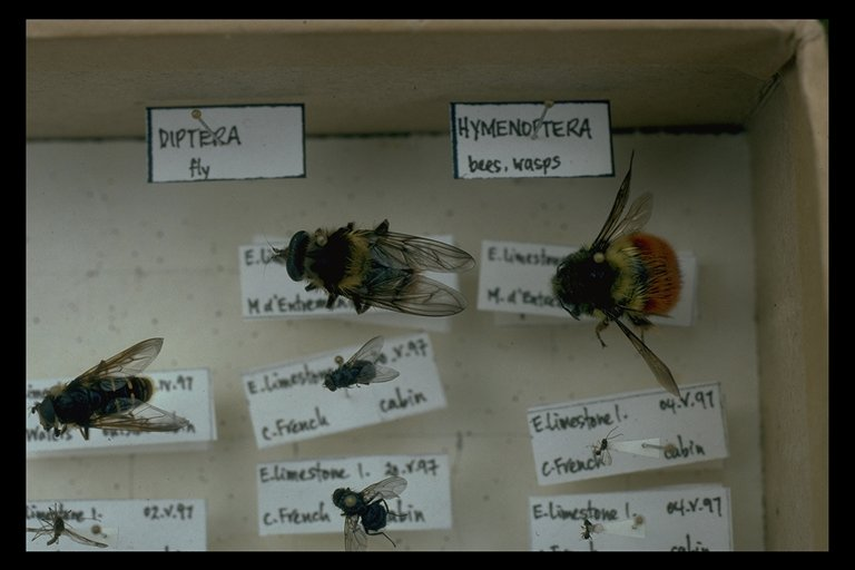 1993 Field Season Summary