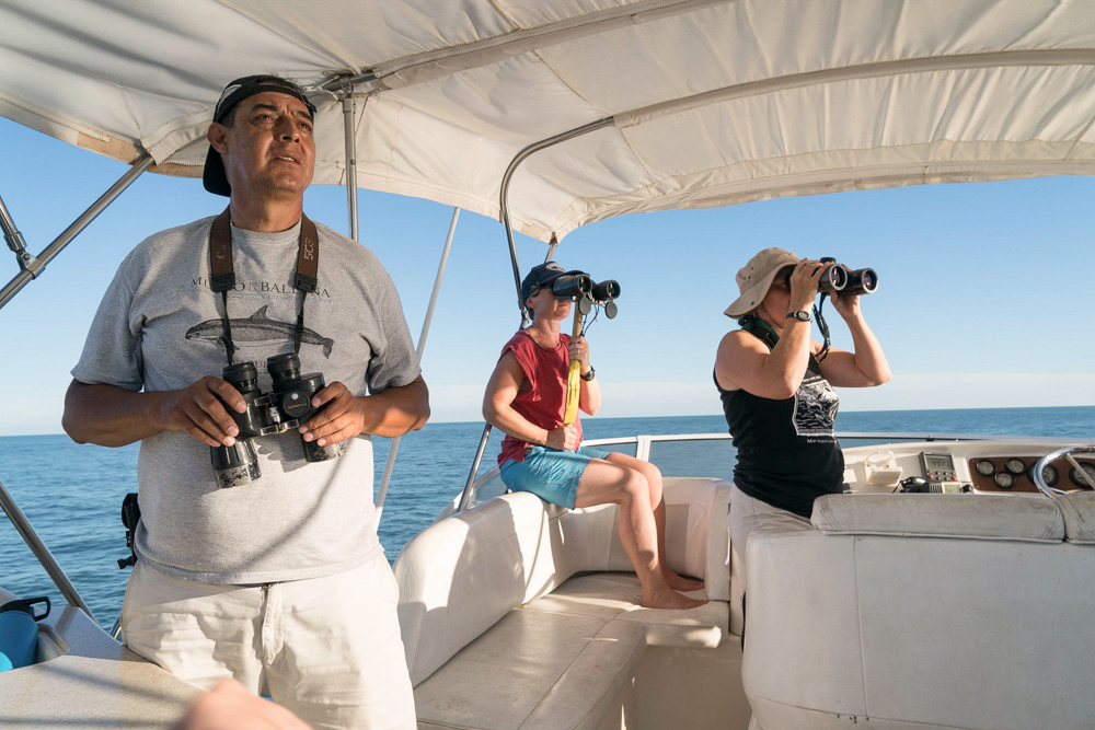 The observer crew has located a pair of vaquita. They are watching as the catch team is trying to encircle them with nets and catch them. © Emre Caylak