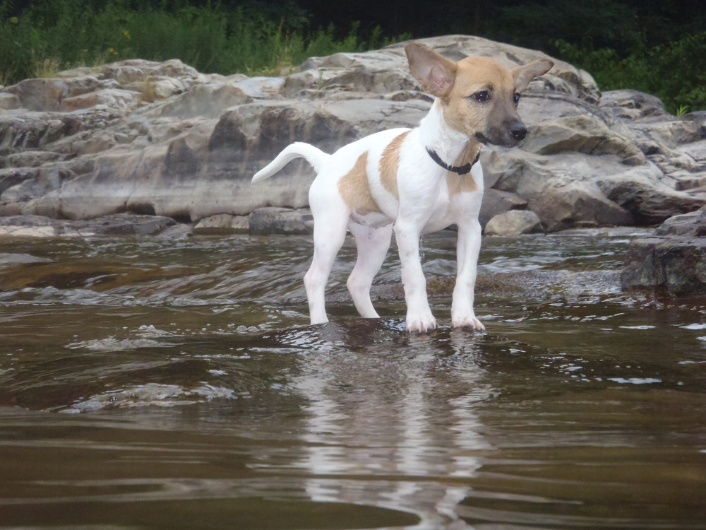 River pup, not afraid!