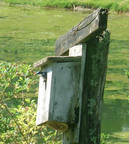 Bird box by the pond
