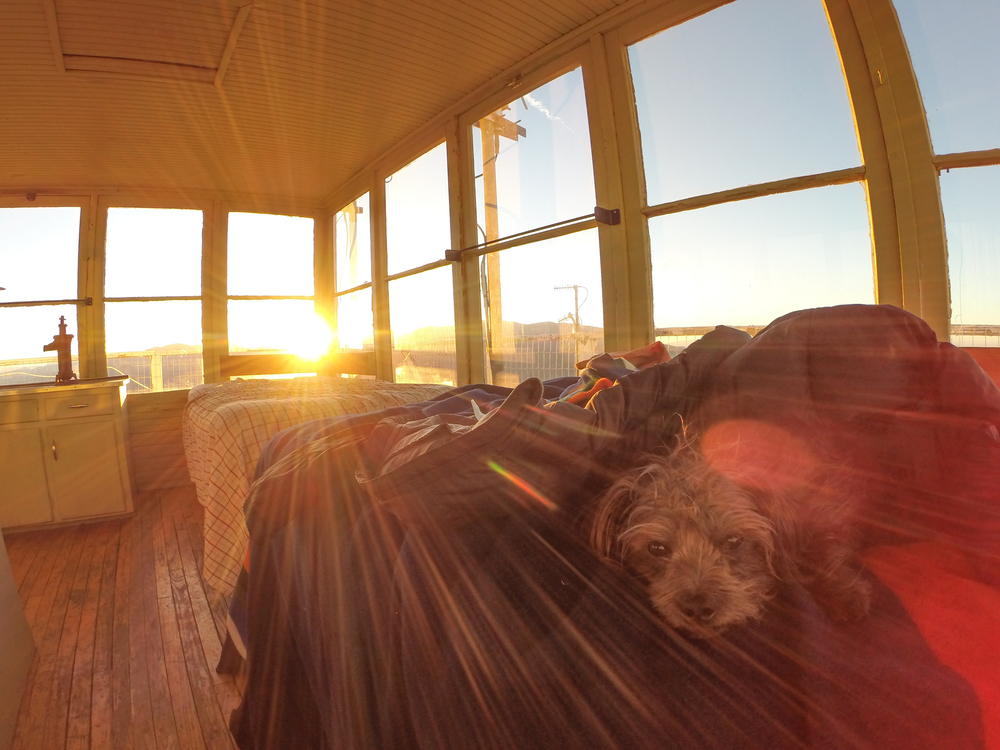 Max in bed while the sun rises at Oak Flat