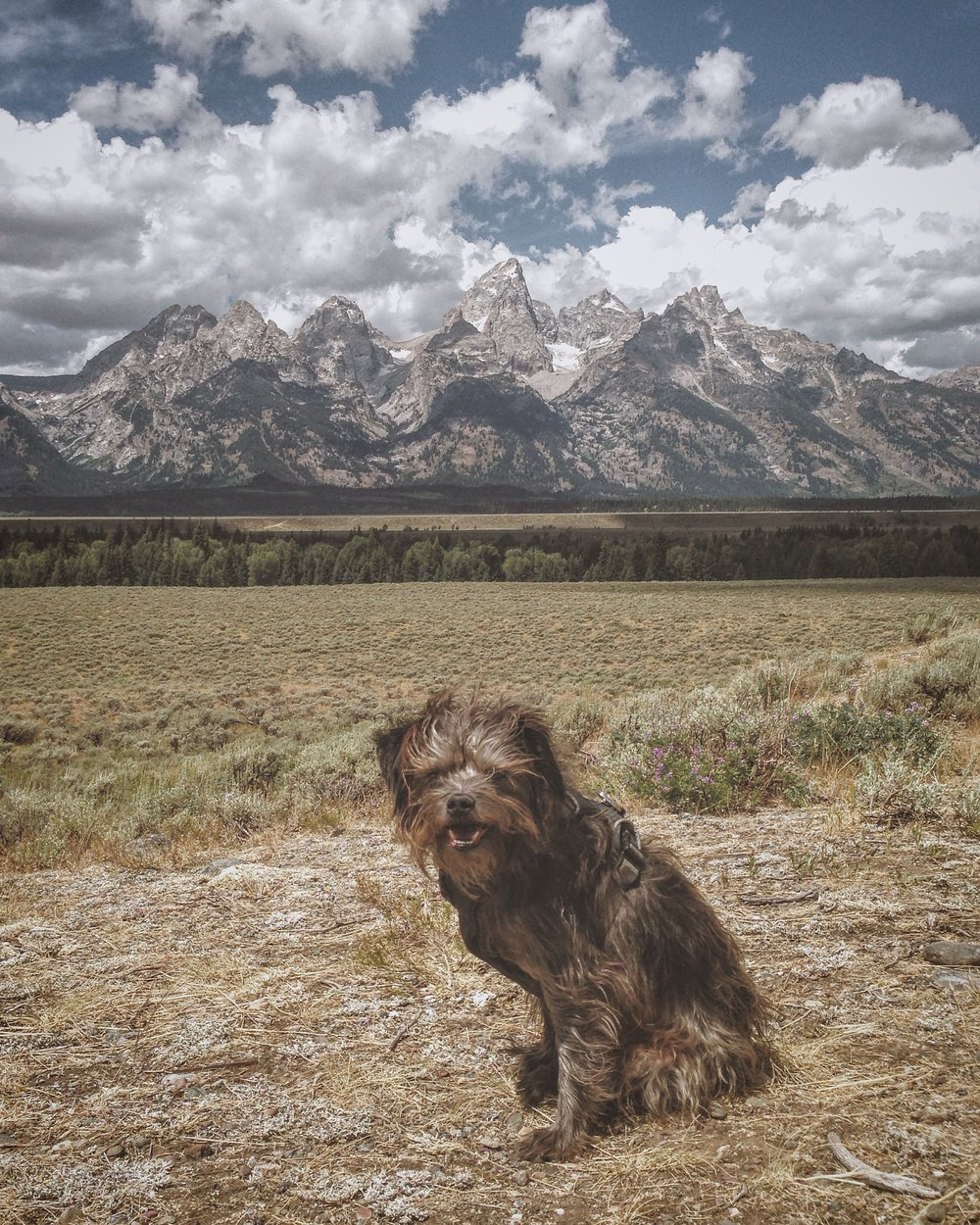 Max in front of the Tetons