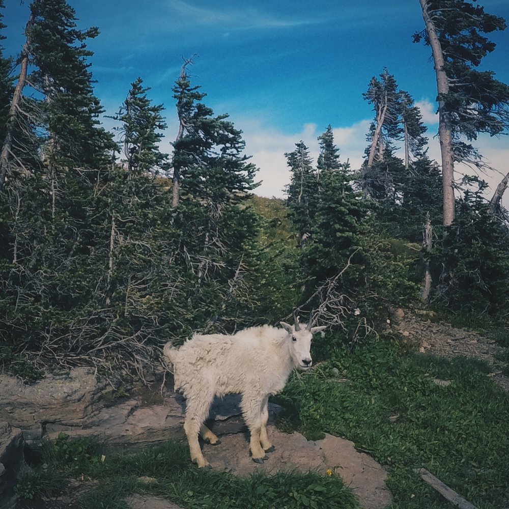 Greeting a local on my hike in Glacier