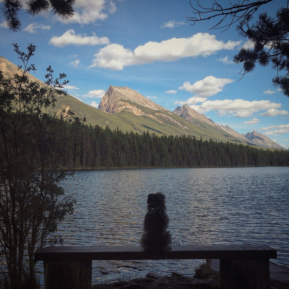 Max taking in the view at honeymoon lake