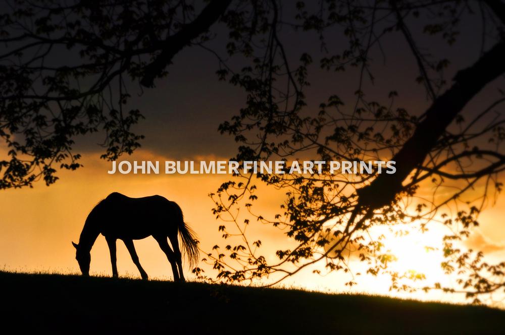 horses-5.jpg