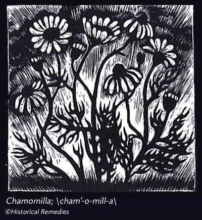 chamomilla.jpg
