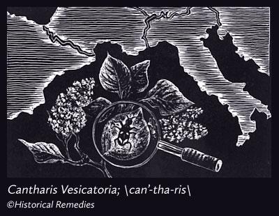 cantharis.jpg