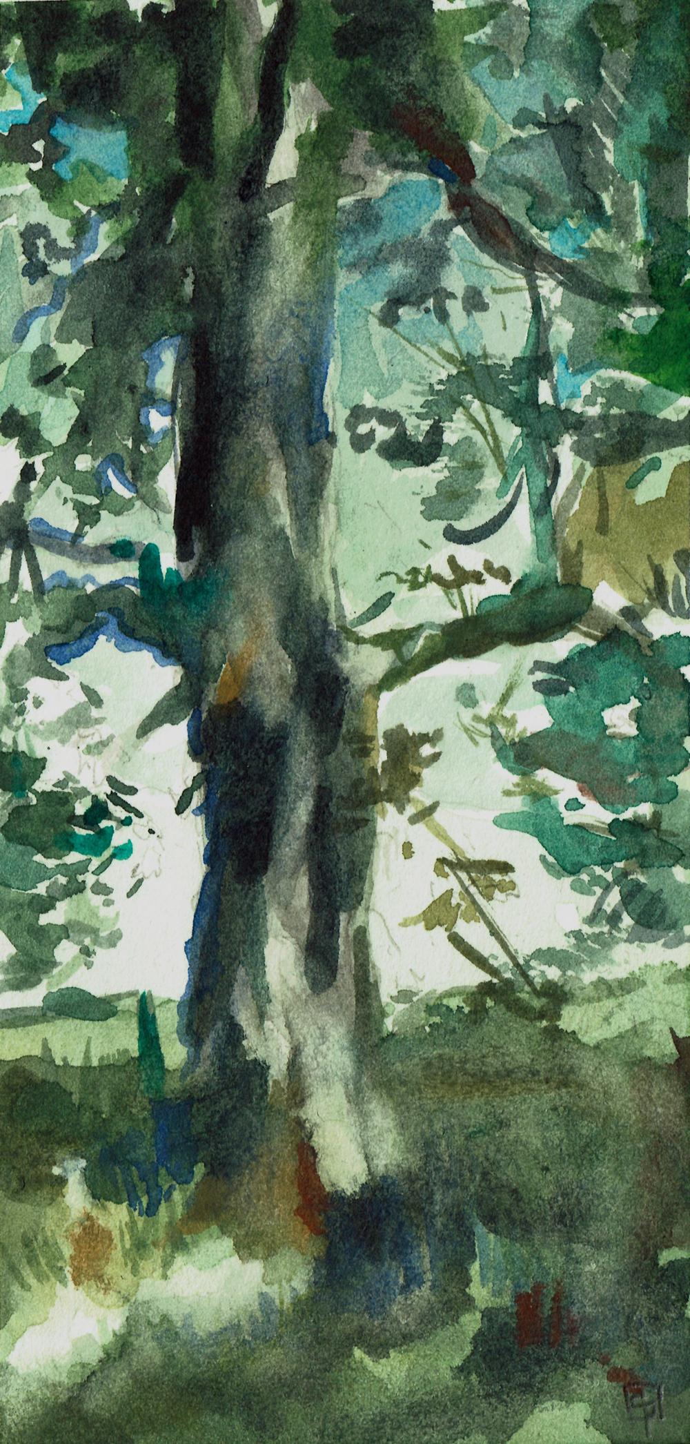 tree_Stone-Pirrie_Casey.jpg