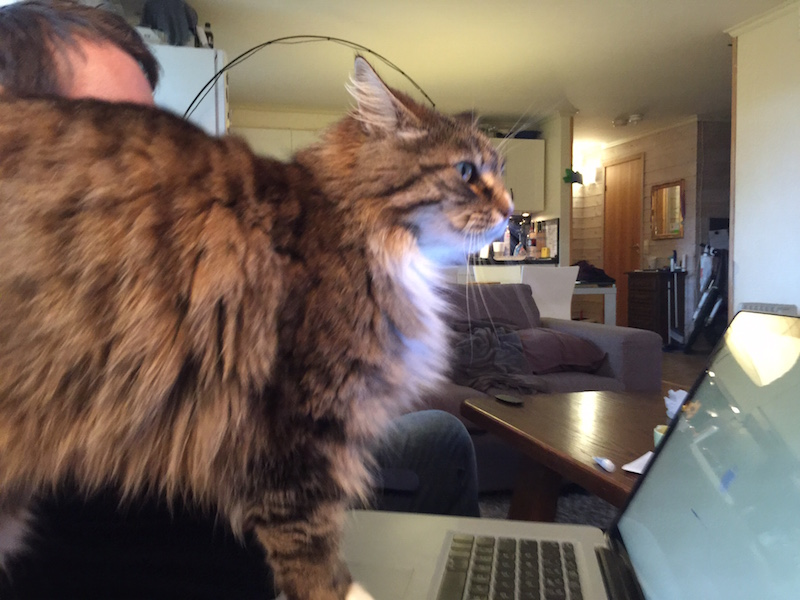 Caturday: Leo the Norwegian Forest Cat reboots her MacBook Pro