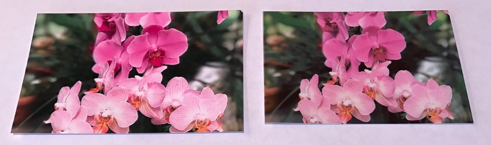 The variegation on the leaves is more prominent in the PICKIT 20 image (left), and the colors are less muted than in the HP Sprocket image (right).