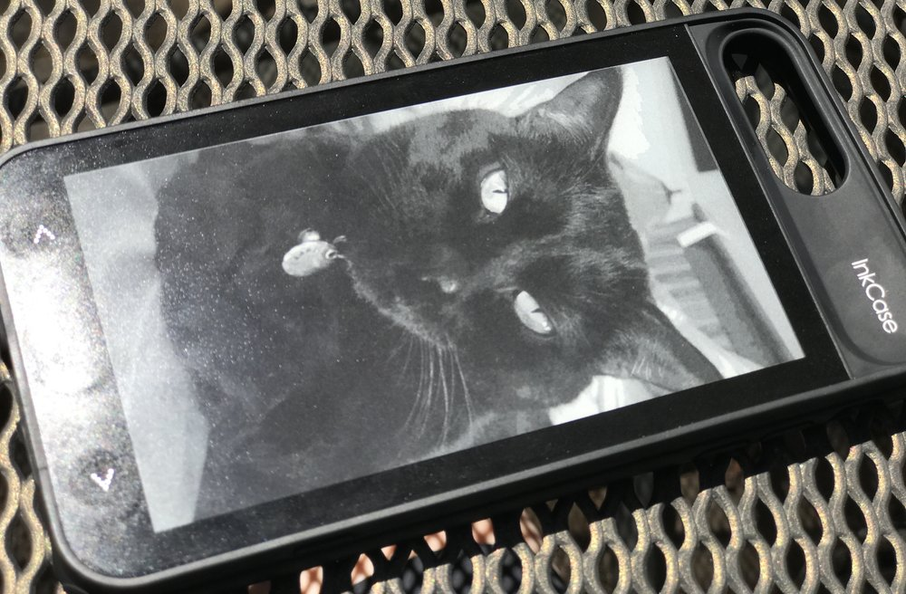 Black cats look great on an e-ink display! Photo ©2017, Steven Sande