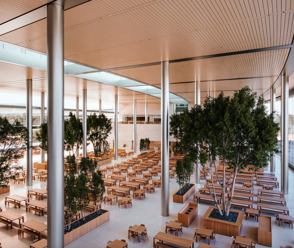 Apple Park HQ Building Café.  Photo by Mark Mahaney for Wallpaper•