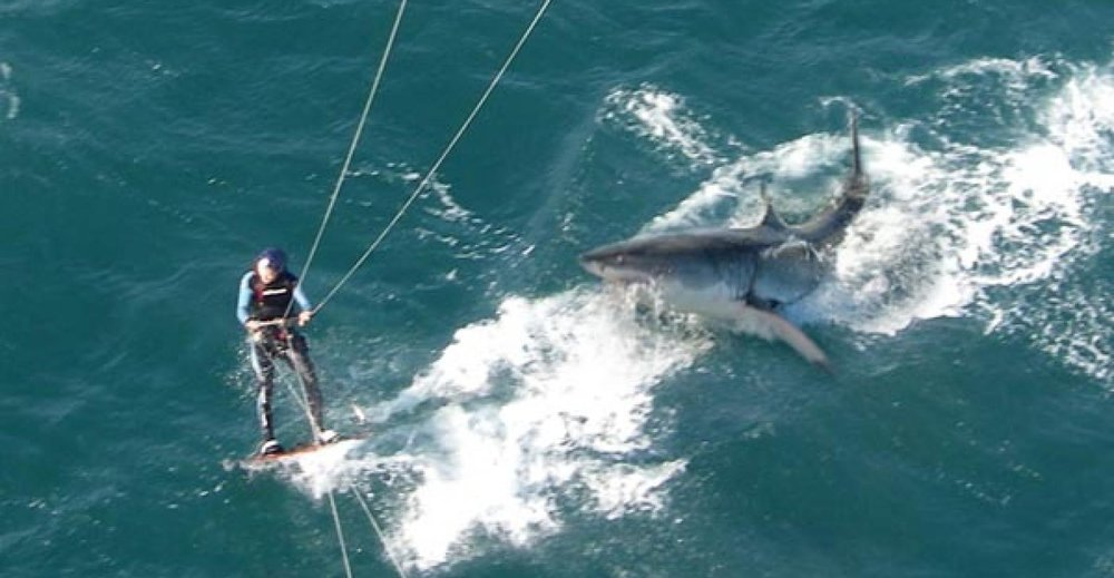 Kitesurfer and Great White Shark. NOT our guy with the Apple Watch Series 3, though. Photo via  LOHESURF.EU