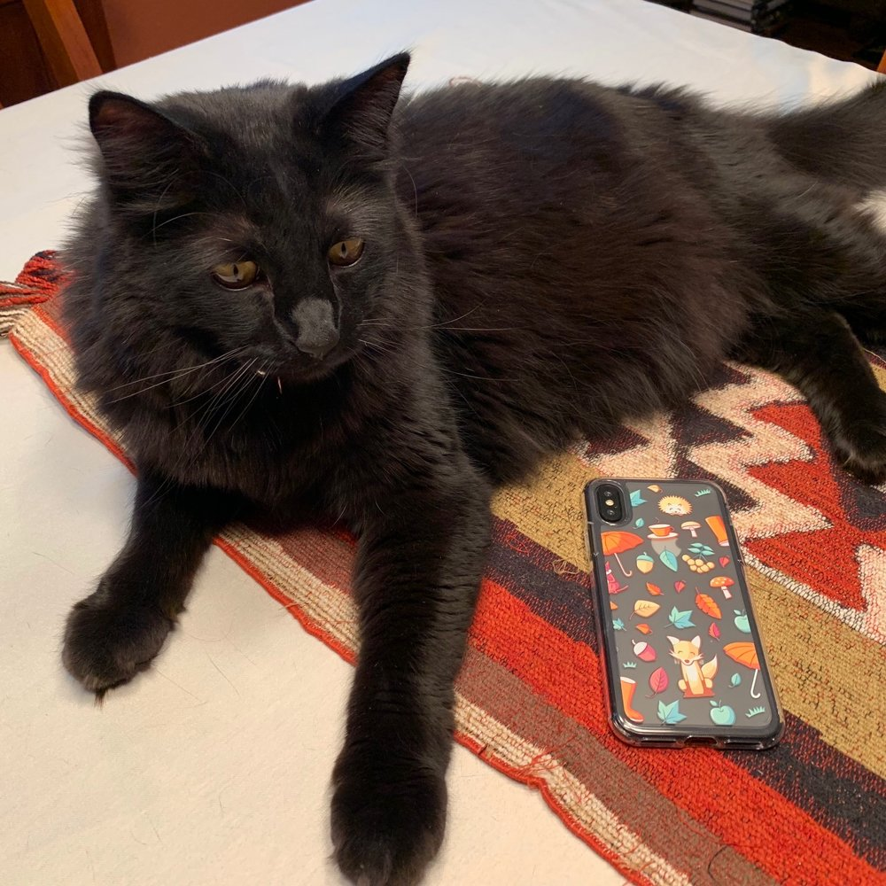 """Pippin the cat, modeling the Silk Nudist case in """"Chef's Special"""" design"""