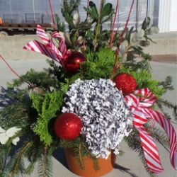 "12"" Outdoor Winter Container Variety of accent colors & bows (red, gold, or silver) - $50"