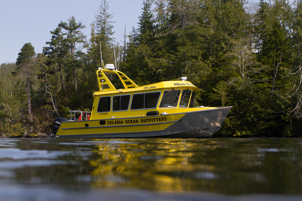 Whale Watching, Tofino, Bear Watching, Hot Springs Cove, Covered Boat, Tours, Adventure, Miss B Haven