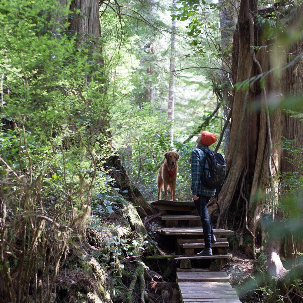 trail-walking-tofino-bc.jpg