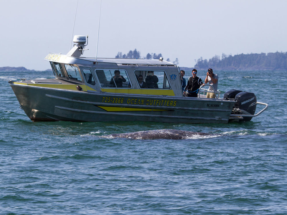 family-private-whale-watching-charter-tofino.jpg