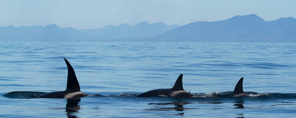 Whale Watching Details -