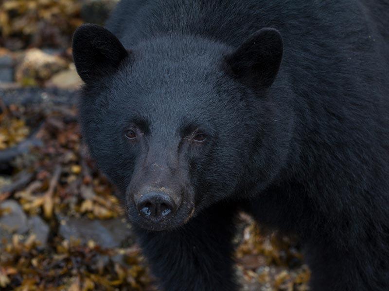 bear-watching-covered-boat-1.jpg