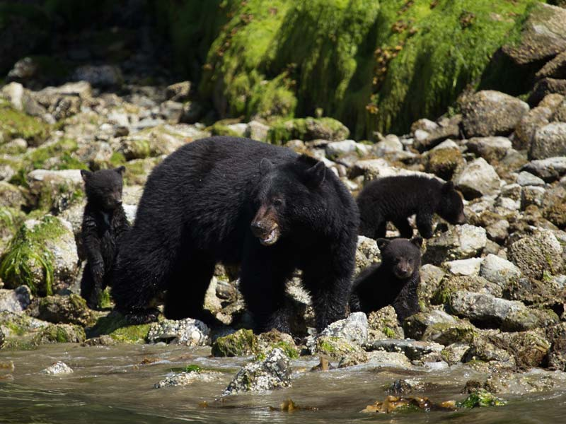 bear-watching-covered-boat-2.jpg