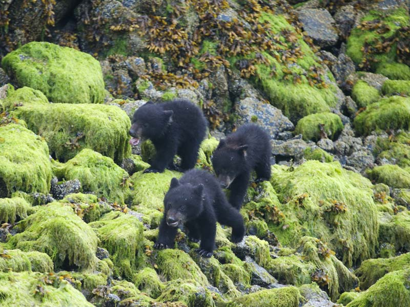 bear-watching-covered-boat-3.jpg