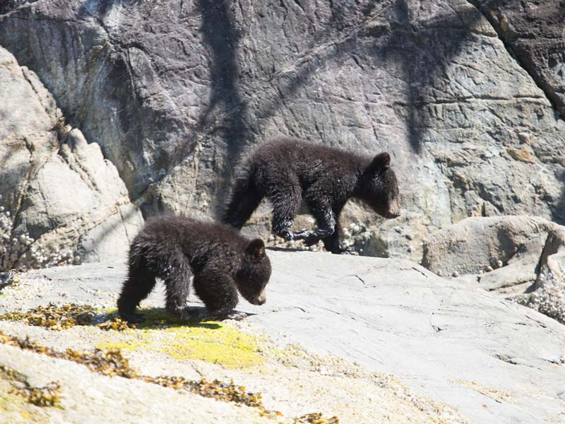 bear-watching-zodiac-boat-2.jpg