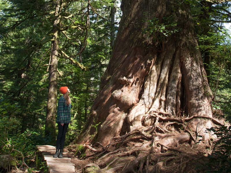 Big-Tree-Trail-Tofino-6.jpg