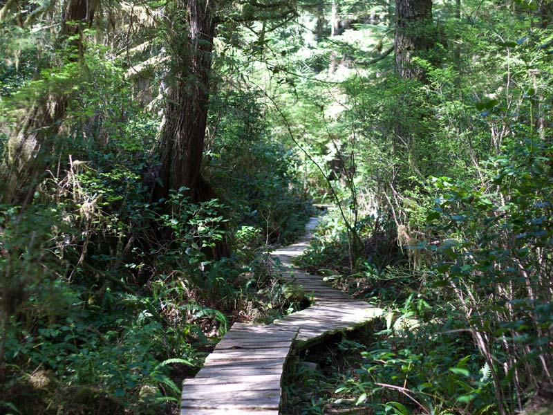 Big-Tree-Trail-Tofino-8.jpg