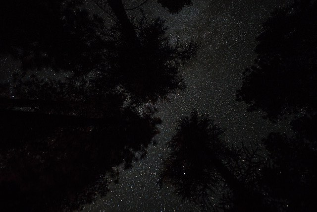 Stars ✨ ✨✨ I wish this image did them justice.