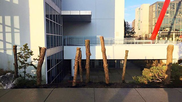 Spent more time discussing with colleagues whether these logs have always been affixed into this landscape, than Trump spent picking his cabinet. #artschool #willtheygrowback #myccad #borderwallissuperlow