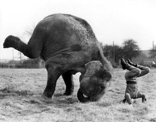 elephantyoga.jpg