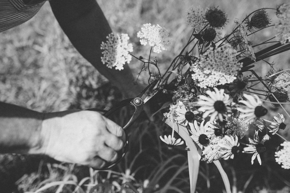 roadside-flowers-0093.jpg