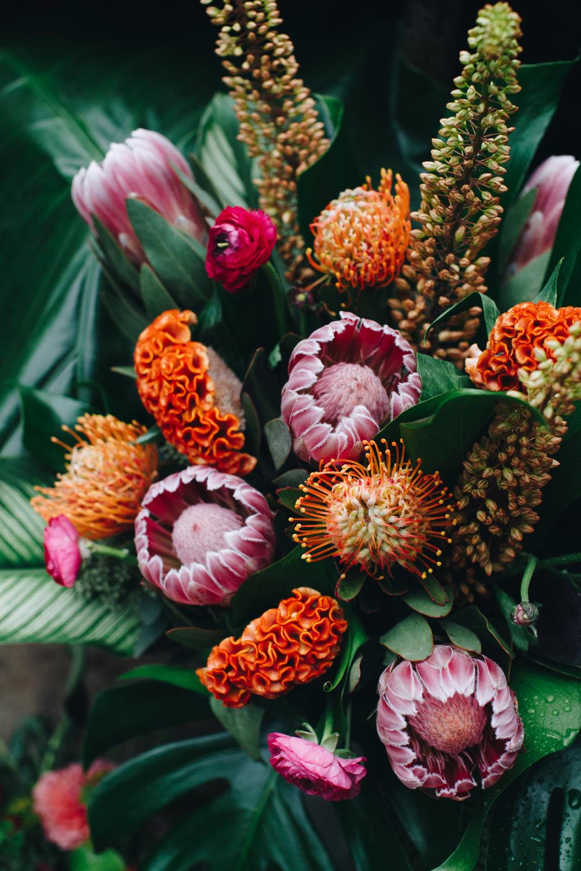 plantshed-01-8233.jpg