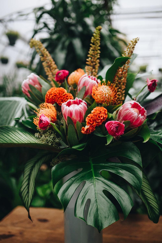plantshed-01-8300.jpg
