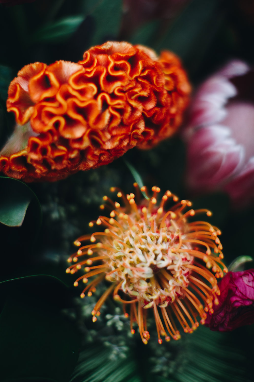 plantshed-01-8264.jpg