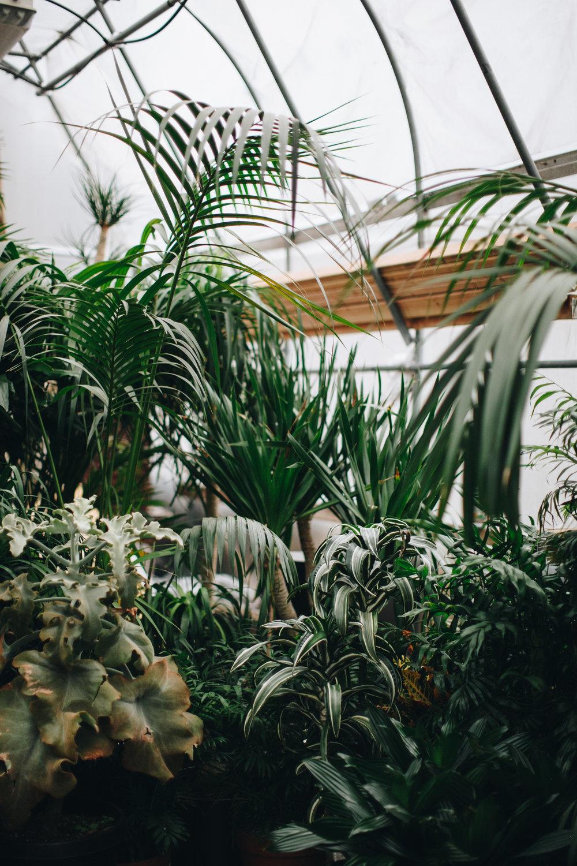 plantshed-9404.jpg