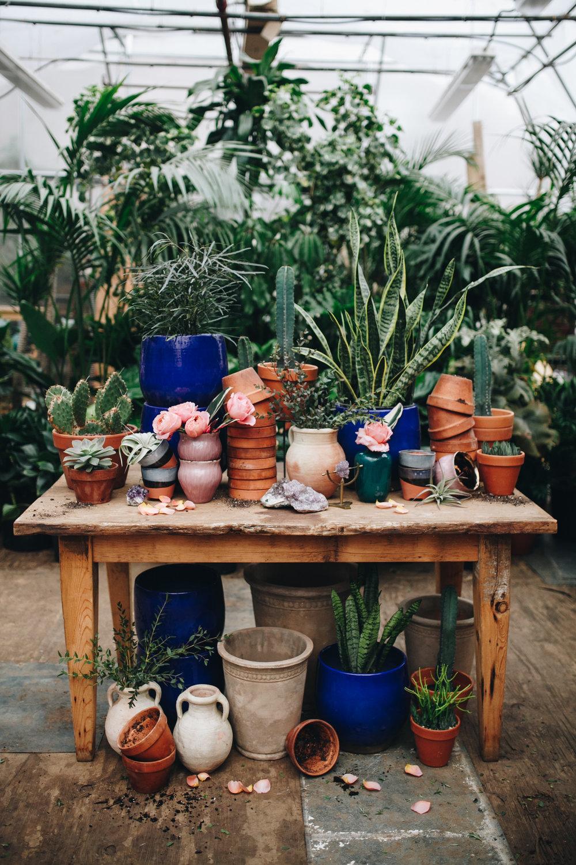 plantshed-9255.jpg